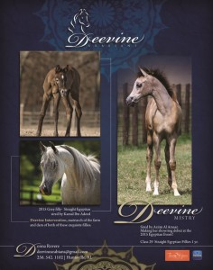 Looking for an exceptional Show Filly????
